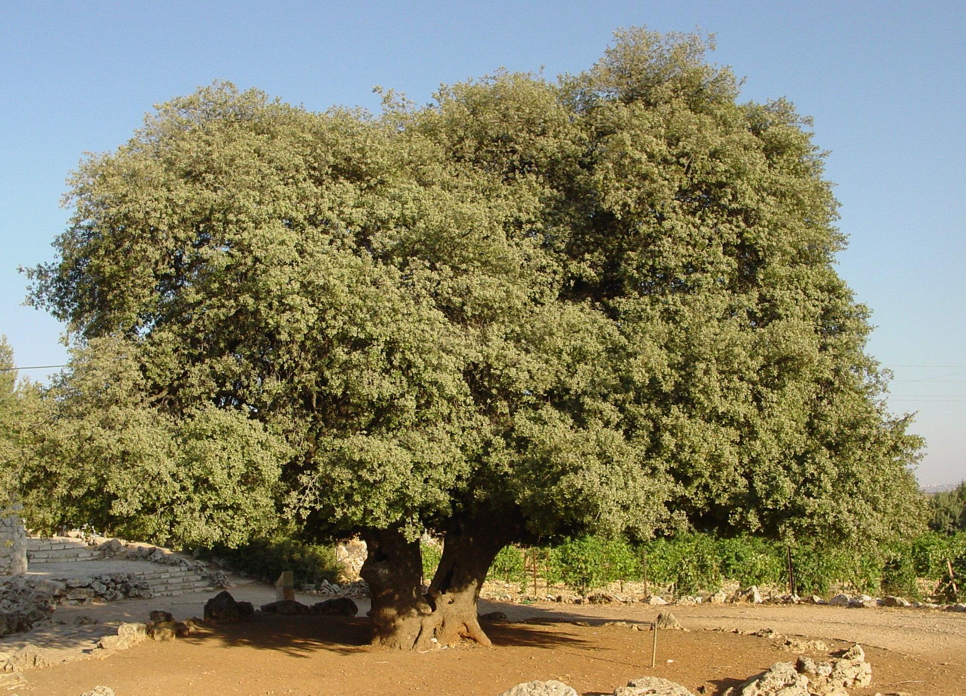 Lonely Tree 1