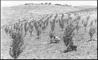orchard in KE